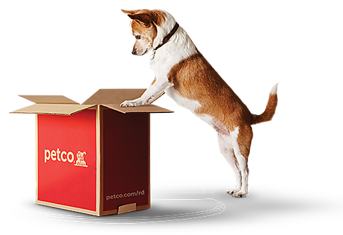 image of dog with repeat delivery box