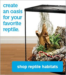 reptile habitats - shop now