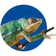 Featured Categories - Chameleon