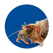 Featured Categories - Hermit Crab Shop