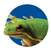 Featured Categories - Live Reptiles