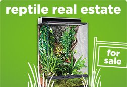 Reptile Terrariums & Cages | Reptile Tanks & Enclosures | Petco