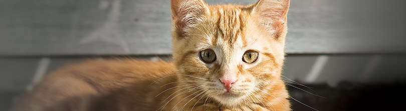 Five Ways to Make Your Home Ready for a New Kitten