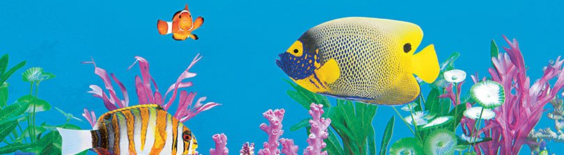 8 Tips to Keep Your Freshwater Fish Happy and Healthy