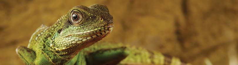 Reptile Care Basics: Food, Habitats & More