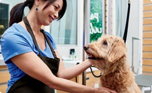 Pet Supplies Pet Food And Pet Products Petco