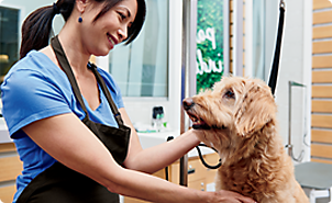 Pet supplies pet food and pet products petco dog grooming solutioingenieria Images