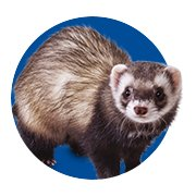 Featured Categories - Ferret Shop