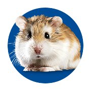 Featured Categories - Hamster & Gerbil Shop