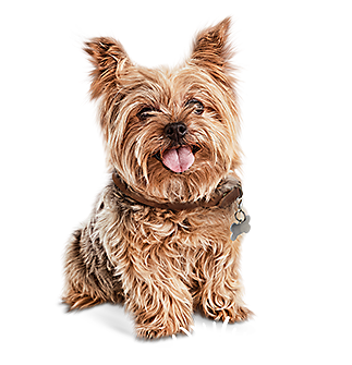Pet supplies pet food and pet products petco small breed big taste solutioingenieria Choice Image