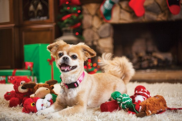 learn about important things like if poinsettias are poisonous to cats why christmas trees are dangerous to pets and decorating precautions you should - Are Christmas Trees Poisonous To Cats