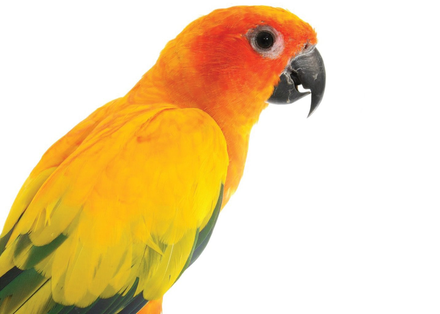 Discount Bird Toys : Sun conure bird care sheet petco