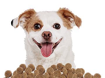 Top Grain Free Dog Food Petco