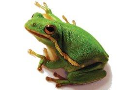 Tree Frogs Care Sheet Petco