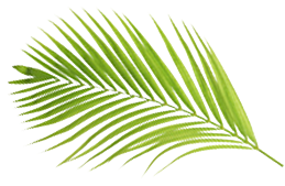 Smaller Palm Branch