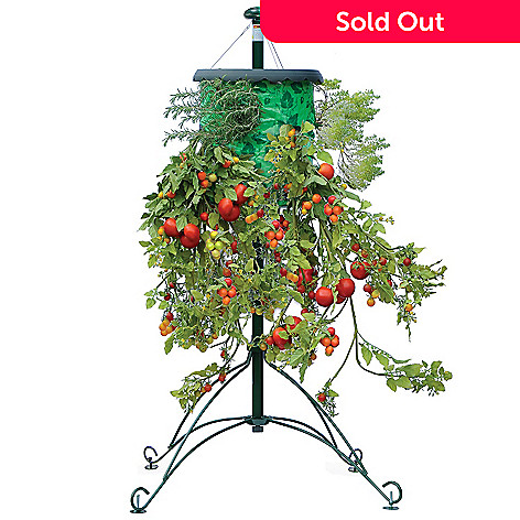 000 966 Topsy Turvy Set Of Two Tomato Trees W Watering