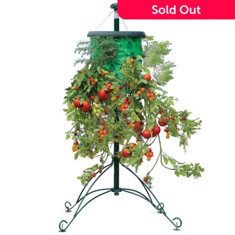 Topsy Turvy Set Of Two Tomato Trees W Watering Feeding Canes Evine