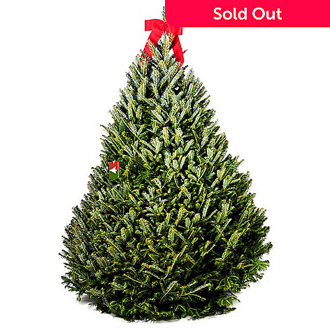 433 994 The Christmas Tree Company 5 6 Fresh Cut Premium Grade