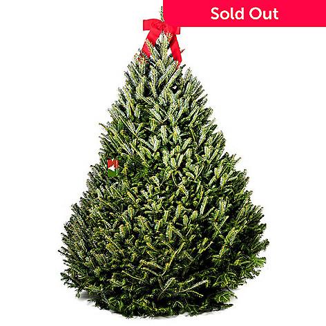 434-002- The Christmas Tree Company 7.5-8' Fresh Cut Premium Grade - The Christmas Tree Company 7.5-8' Fresh Cut Premium Grade Fraser Fir