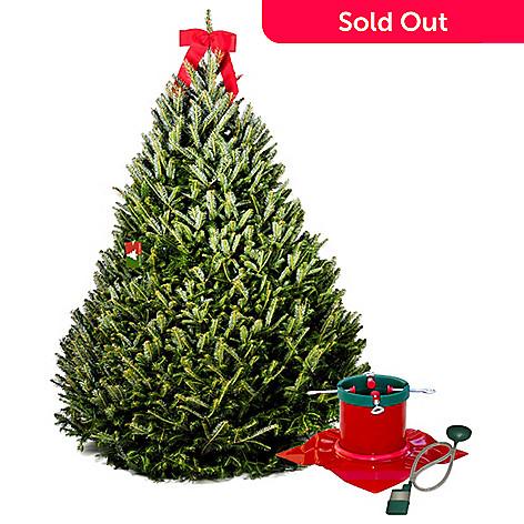 Fraser Fir Christmas Trees.The Christmas Tree Company 6 5 7 Fraser Fir Christmas Tree Signature Tree Stand