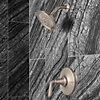 Product Vignette for pf_northcott_lg89-7mgk_v1