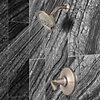 Product Vignette for pf_northcott_lg89-7mgk_v2