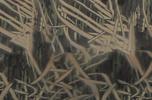 Mossy Oak Shadowgrass
