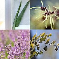 Six Essential Botanicals with Dr. Alkaitis