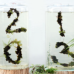 Garden Resolutions 2013
