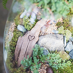 Valentine's Day Terrariums