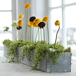 How-To: Ranunculus Row