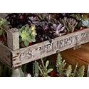 Blooming Spotlight: Terrarium Succulent Garden