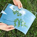 How-To: Create a Sunprint