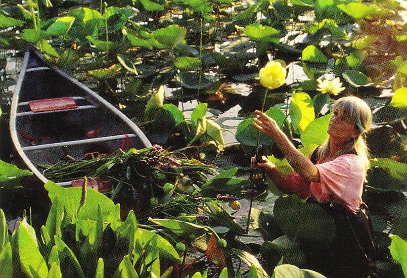 Artist at Work: Becky Davis Botanicals