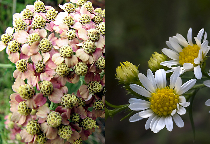7 Flowers For Midsummer The Blog At Terrain Terrain
