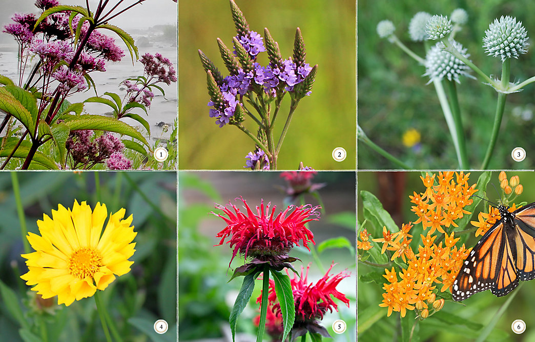 6 Native Plants For A Butterfly Garden