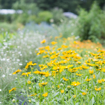 How to Plant a Meadow Garden