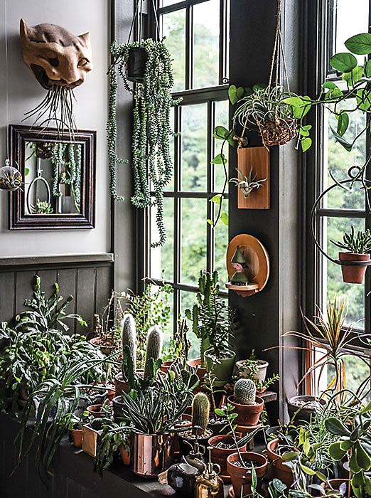 Inside The Home Of Plant Stylist Hilton Carter Blog At