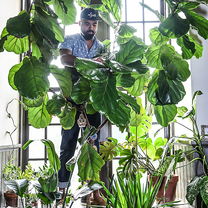 Inside the Home of Plant Stylist Hilton Carter