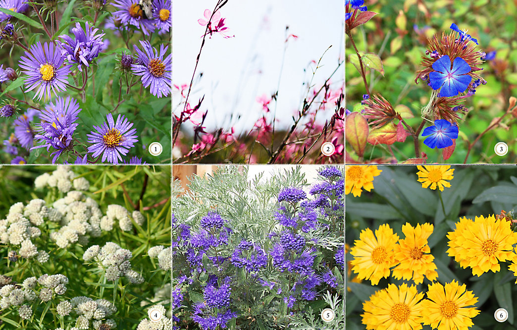 Late Bloomers: 6 Favorite Fall Flowers