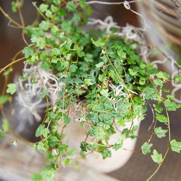 New in the Nursery: An Indoor Plant Delivery from Florida