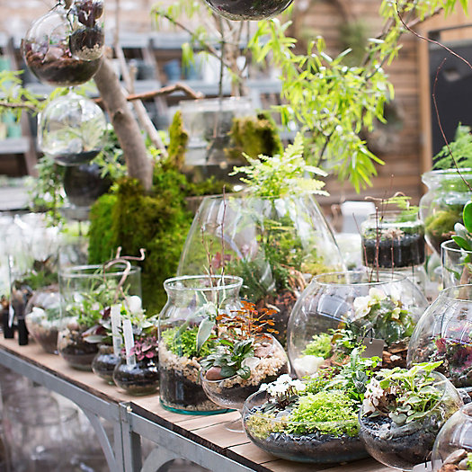 View larger image of Winter Terrariums