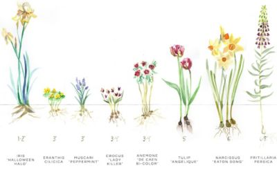 Fall Bulb Planting Guide The BLOG at Terrain