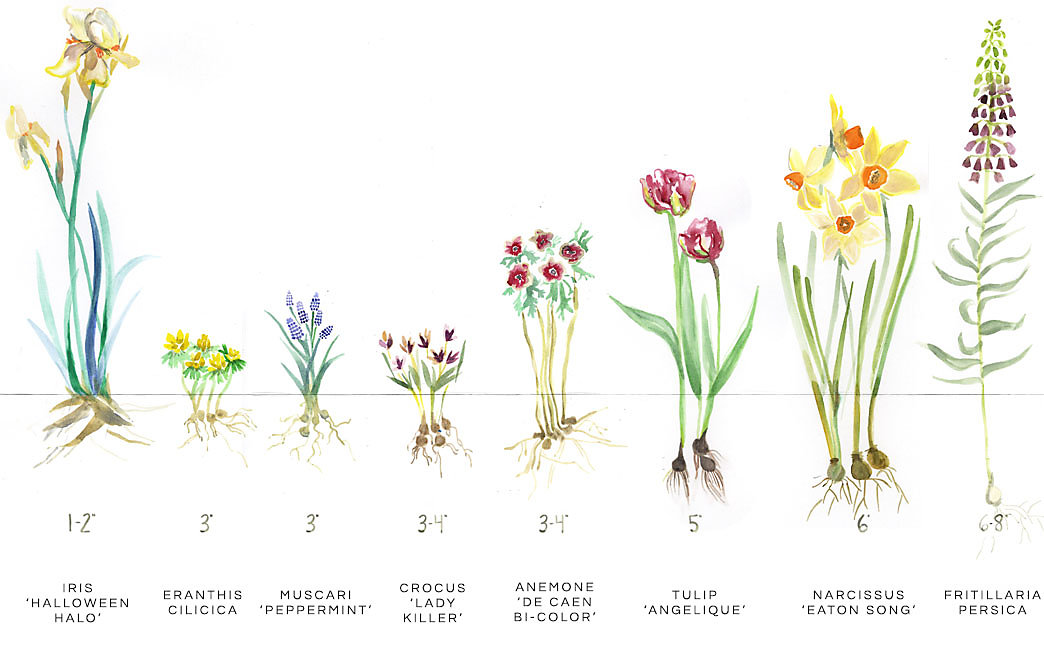fall bulb planting guide the blog at terrain. Black Bedroom Furniture Sets. Home Design Ideas