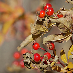 6 Plants to Forage This Fall