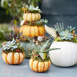 3 Planted Fall Centerpieces