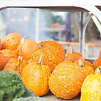 New in the Nursery: Pumpkins