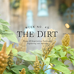 The Dirt | 2014 | week no. 45