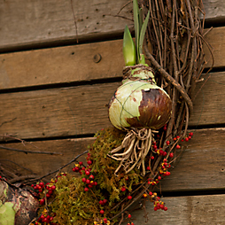 Living Gifts: Our Forced Bulb Wreath