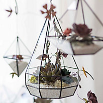 Watch: Building a Forever Terrarium
